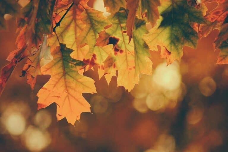 4 Ways to Prevent Roof Damage This Fall
